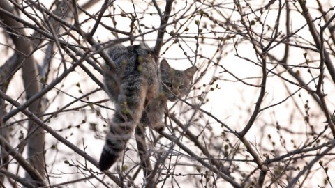 Wild Cat Photo from Bulgaria