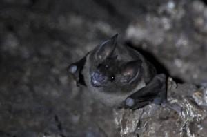 Bat Rio Azul 2