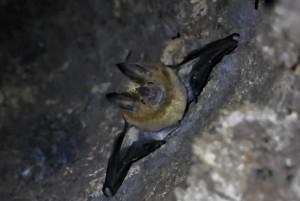 Bat Rio Azul 3