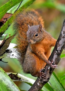 EC-squirrel