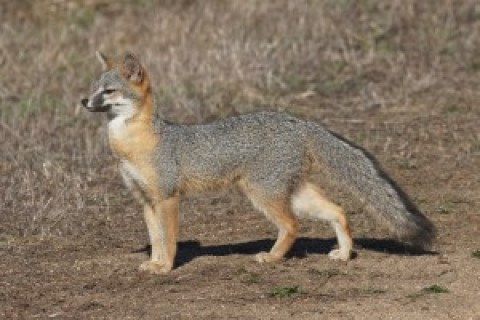 California recent sightings and Channel Islands/SoCal RFI