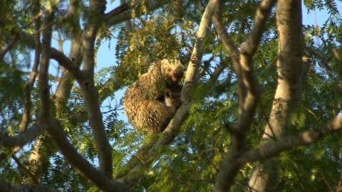 Pantanal Wildlife Holiday Trip Report – Royle Safaris (3)