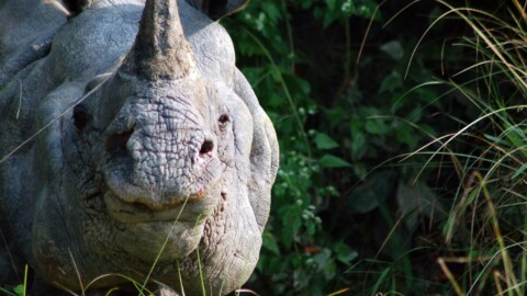 India & Nepal Wildlife Holiday Trip Report – Royle Safaris
