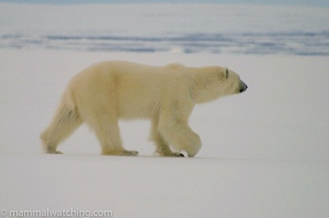 Nunavut Including Baffin Island