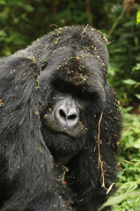 Uganda & Rwanda Primate Watching Specialist Trip Report – Royle Safaris