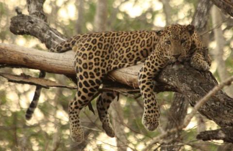 South India & Tadoba Mammal Tour – Trip Report from Royle Safaris