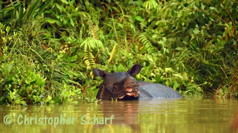 Javan Rhino Expedition 2018 – Spaces Still Available