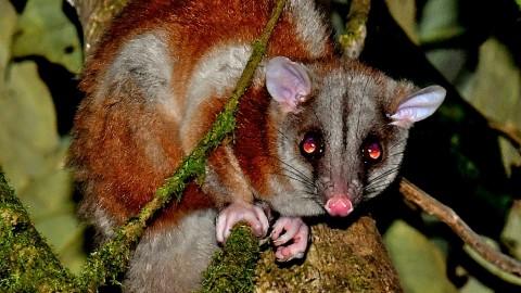 Nicaragua 11 Dec to 16 Dec 2017 (56 spp incl Tricolored Bat)
