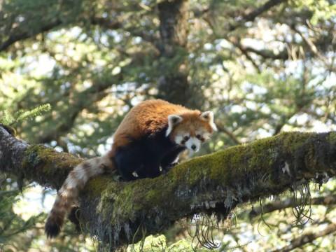 Sichuan's Mammals Tour featuring Wolong Panda Reserve
