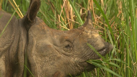 Royle Safaris Chitwan National Park, Nepal Safari Trip Report