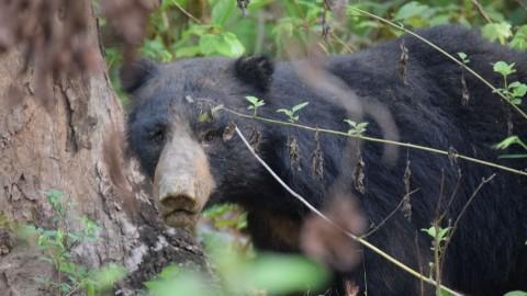 Royle Safaris Chitwan National Park, Nepal Safari Trip Report (2)