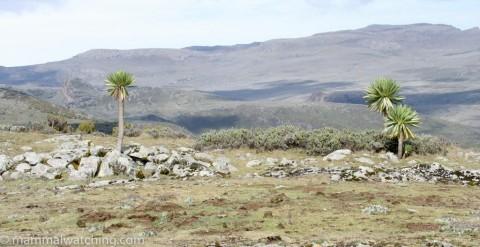 Ethiopia, 2007 Trip Report