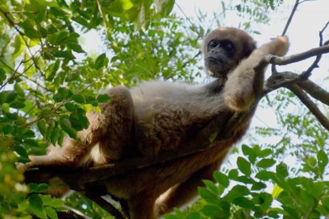 New Trip Report: Fazenda Bacury, Sao Paola, Brazil