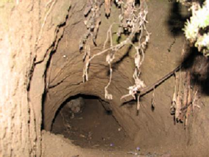 wombat-in-burrow.jpg