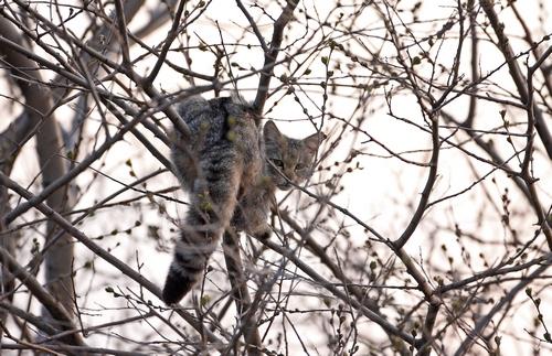 wildcat 1 bulgaria 0904