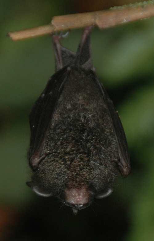 dv bat3