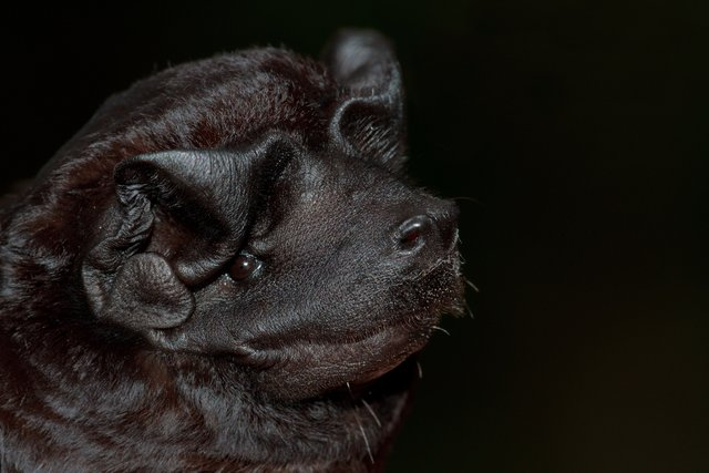 Batwatch Nicaragua