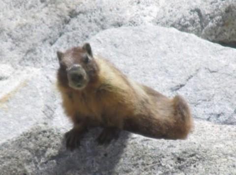 My Mammal Sightings Part 1