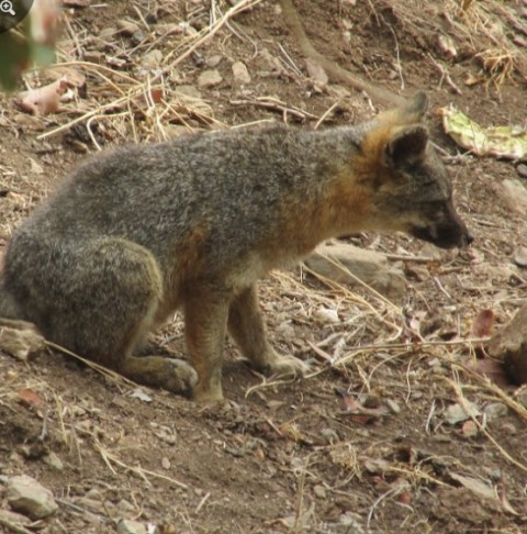My Mammal Sightings Part 2