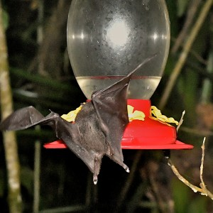 EC-feeder-bat