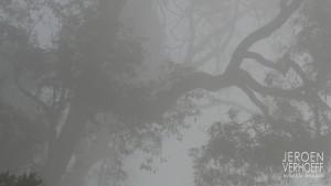 Mammalwatchint thai report rainforest 2018