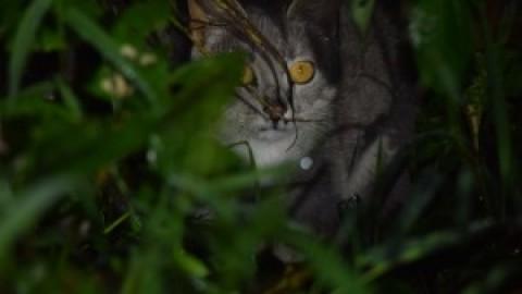 Cat ID assistance