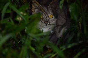 Sa Isidro cat (1)