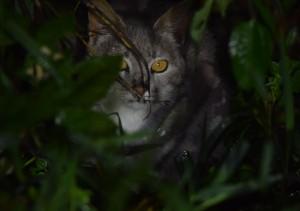 Sa Isidro cat (3)