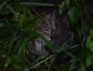 Sa Isidro cat (5)
