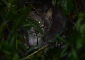 Sa Isidro cat (6)
