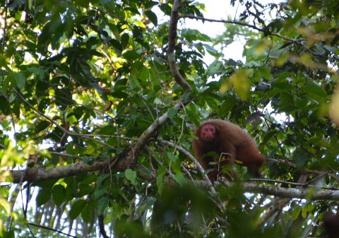Tapiche reserve, Peru