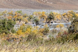 zzimg_0207-wild-camel-habitat