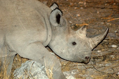 Namibia Wildlife Holiday Trip Report – Royle Safaris