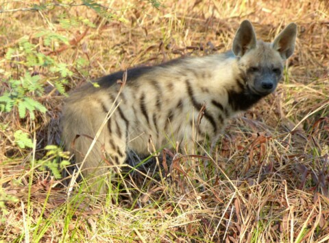 Gujarat Wildlife Holiday Trip Report – Royle Safaris