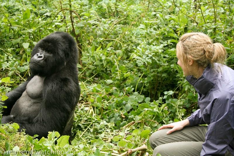 2007-Mountain-Gorilla-1
