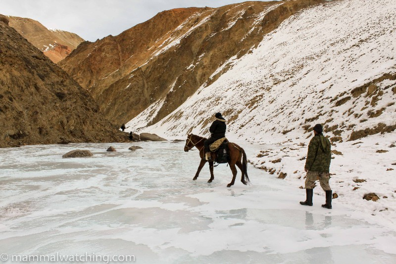 Jon-Hall-horseback-on-ice