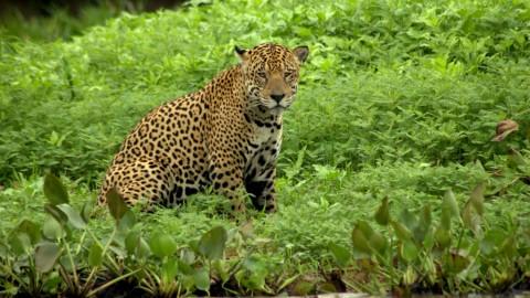 Pantanal Wildlife Holiday Trip Report – Royle Safaris