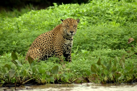 Pantanal Wildlife Holiday Trip Report – Royle Safaris