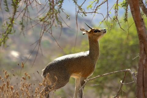 Kenyan Safari Holiday including Mara, Tsavo & Arabuko Sokoke Trip Report – Royle Safaris
