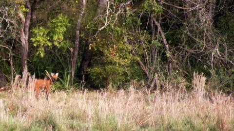 Pantanal Wildlife Holiday Trip Report – Royle Safaris (4)