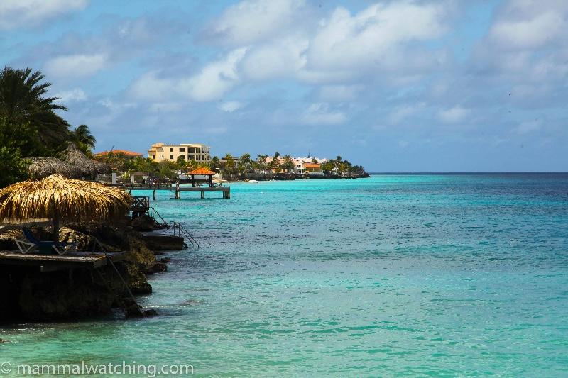 2014-Bonaire-view-1