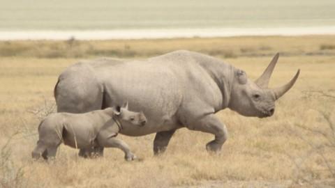 Namibia Wildlife Holiday Trip Report – Royle Safaris (2)