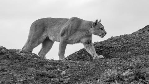 Trip Report Panthergonia 2016