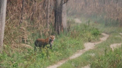 Nepal – Chitwan Safari Trip Report from Royle Safaris