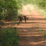 Jaguarsmall