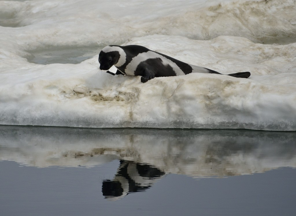 Ribbon-Seal