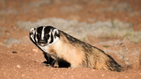 Mammal Watching in North America: A new Facebook group