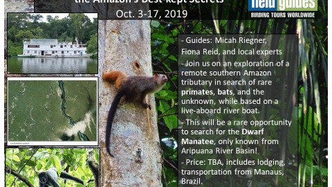 Heads Up! Exciting Amazon Expedition in Planning for 2019