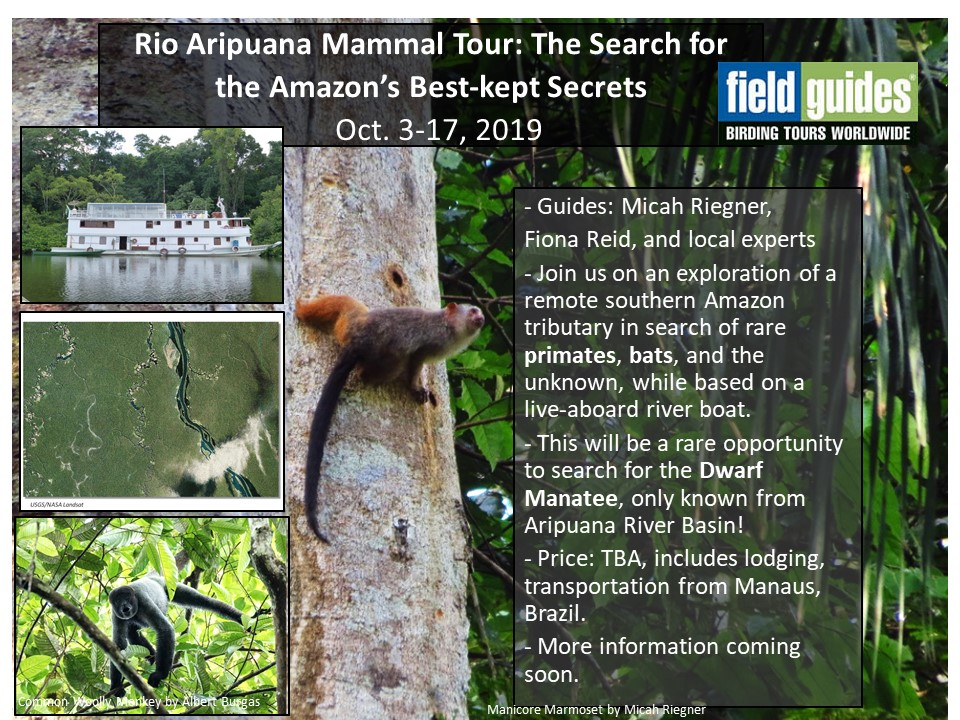 Field Guides Aripuana Mammal Tour