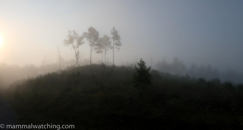 Tallageda Forest